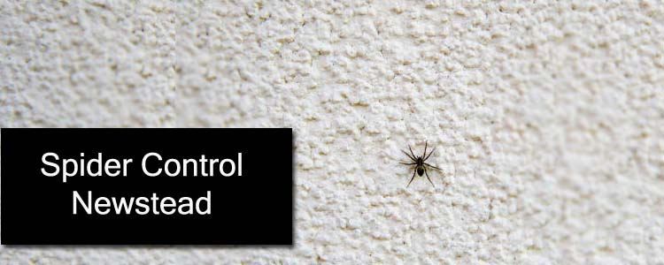 Spider Control Newstead