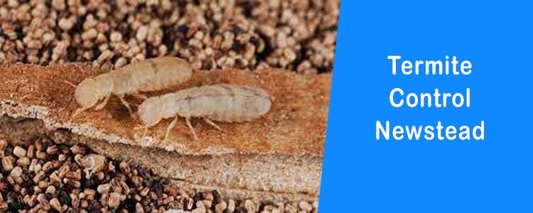 Termite Control Newstead