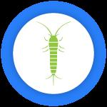 Best Pest Control Newstead
